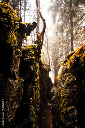 Foto Murales Natur im Wald