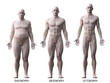 Leinwanddruck Bild - 3d rendered medically accurate illustration of the male body types