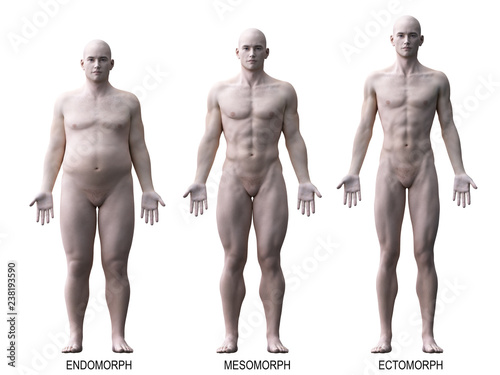 Leinwanddruck Bild 3d rendered medically accurate illustration of the male body types