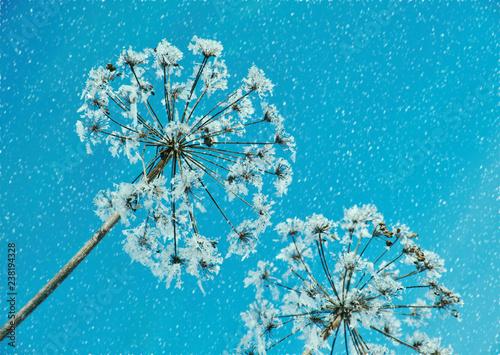 Crystal snow-flowers against the blue sky. - 238194328