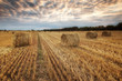 Summer field / Landscape with a field full of hay bales before sunset