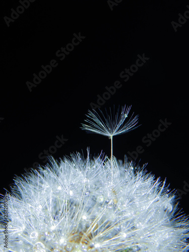 white feather on black background