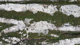concrete wall with moss close up