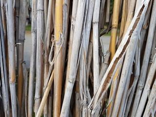 Dry bulrush wall background © Anna