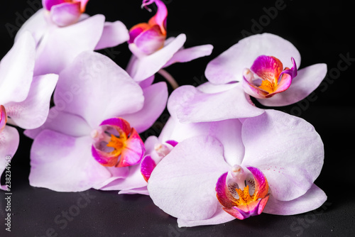 beautiful spa composition of lilac orchid (phalaenopsis) with drops on black background
