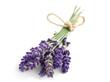 Quadro Lavender flowers