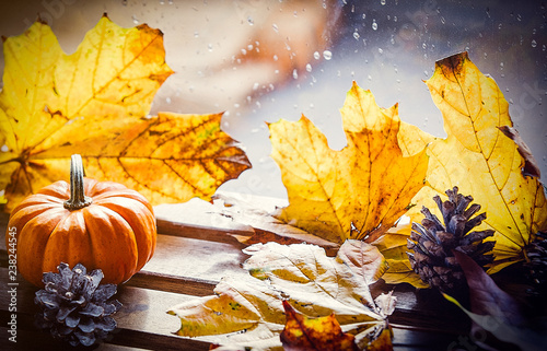 Pumpking and maple leaves near rainy window. Autumn season concept - 238244545