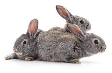 Three little rabbits. © voren1