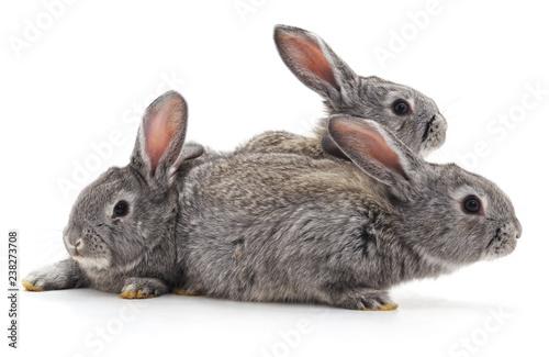 Three little rabbits. - 238273708