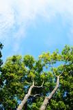 Fototapeta Nature - Nature - Tree - Tree - Pure Beaty © MatinosPhoto