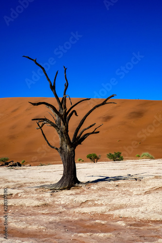 obraz lub plakat 2018-10 Namibia