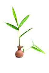bamboo © gunungkawi