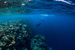 Leinwanddruck Bild - Free diver man dive in ocean, underwater view with rocks and corals