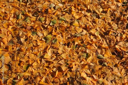 mata magnetyczna autumn leaves background
