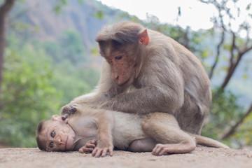 Monkey mom © Кирилл Паньшин