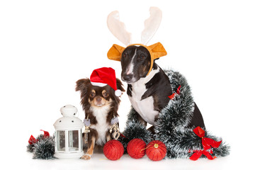 two dogs posing together for Christmas with decorations