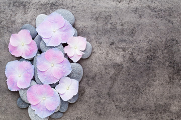Spa flowers and massage stone, on grey background. © gitusik