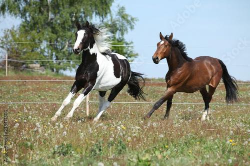 A Nice horse