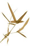 bambou sépia, fond blanc