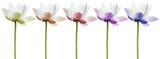 lotus couleurs