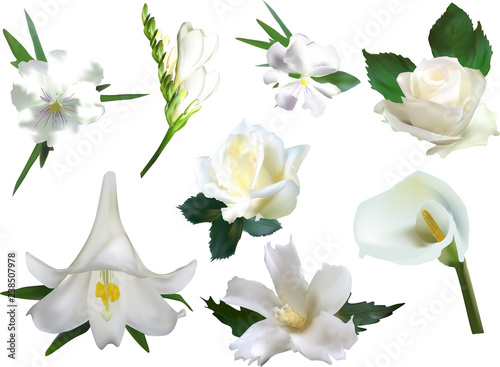 collection of eight isolated white flowers