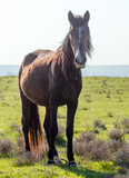 Portrait of a horse in the spring steppe
