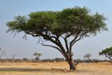 Fototapeta Sawanna - Die Savanne im Südlichen Afrika  © hecke71