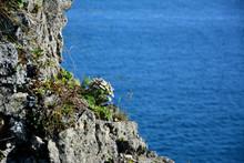 "Постер, картина, фотообои ""rocky shore of the lake overgrown with vegetation and flowers"""