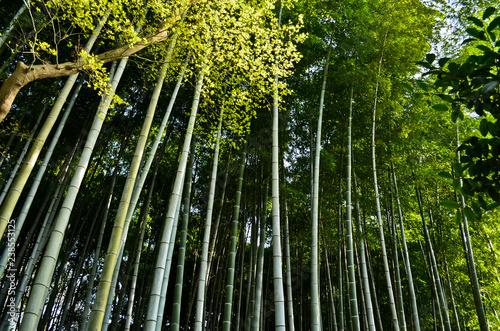 Shoren-in, Kyoto, Japon