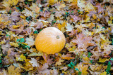 a pumpkin stands on colored leaves in the fall