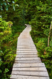 wooden way through forest © fotowunsch