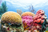 Coral Reef, Belize - Colorful Barrier Reef Photo
