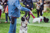 Young shepherd trains at an exhibition of dogs, looks at the hostess