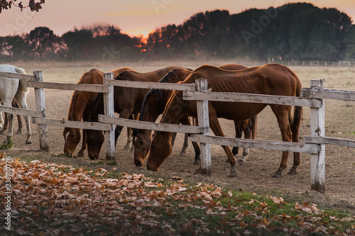 Beautiful horses in the nature