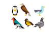 Birds set, penguin, eagle, gull, pigeon vector Illustration