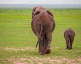 elephant walking away - 238717926