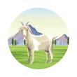Goat farm animal