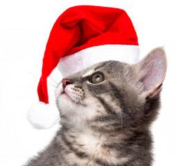 kitten with santa cap on a white background