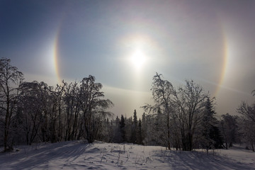 Solar halo over the winter forest © Alexander