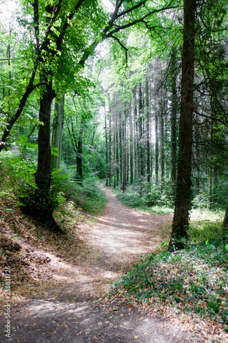 Trees in forest - 238831726