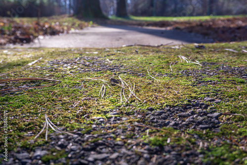 Green moss grown up cover the asphalt driveway Show with macro view.  - 238842171