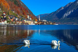 Two beautiful swans enjoy swimming in crystal clear water of mountain Hallstatt lake with stunning view on old historic village and lake with blue sky, historic church and mountains