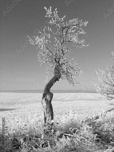 tree in hoar frost - 238902902