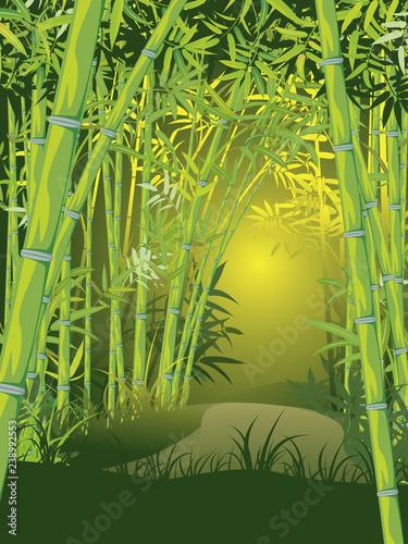 Bamboo forest scene