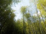Cimes de bambous géant sous un ciel bleu