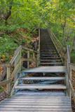 steile, lange Holztreppe im Wald von Möns Klint auf der Insel Mön in Dänemark