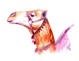 Camel. Watercolor illustration
