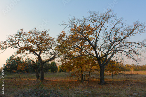 Foto Murales Trees in the meadow of autumn