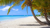 Fototapeta Krajobraz - Caribbean beach paradise dominican republic island Saona with palm tree © Vasily Makarov