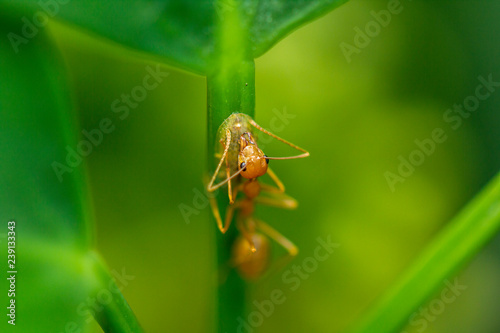 Ants are on leaves in nature. - 239133343